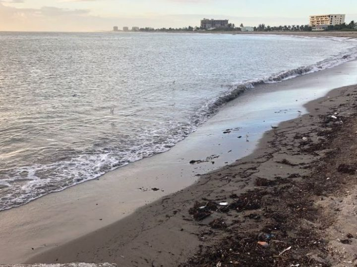 Senate moves forward with red tide research | Local News Shared By West Delray Collision